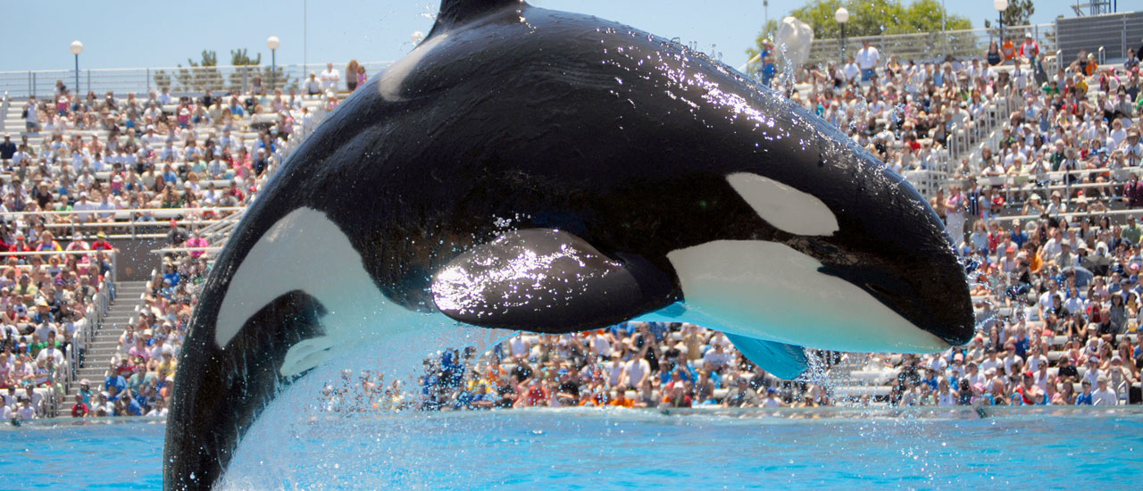 SeaWorld at California