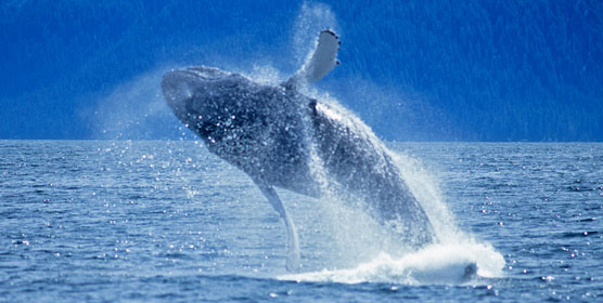 Harbour Excursion & Whale Watching Package at California Hotel