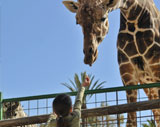 San Diego Zoo & Safari Package at California Hotel